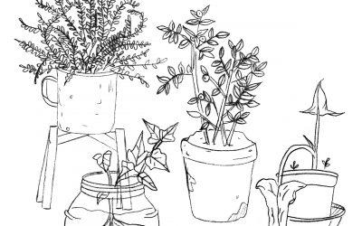 Plantas coloreables para entretenernos esta cuarentena