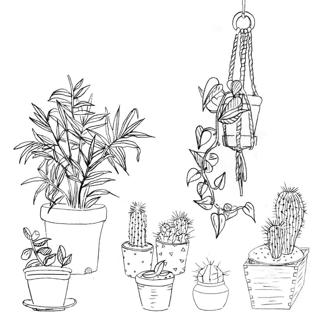 Ilustración de plantas para colorear.
