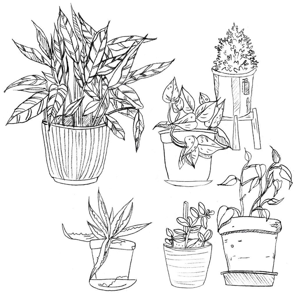 Dibujo de plantas para colorear.