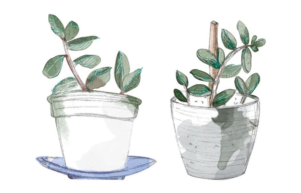 ilustración de plantas