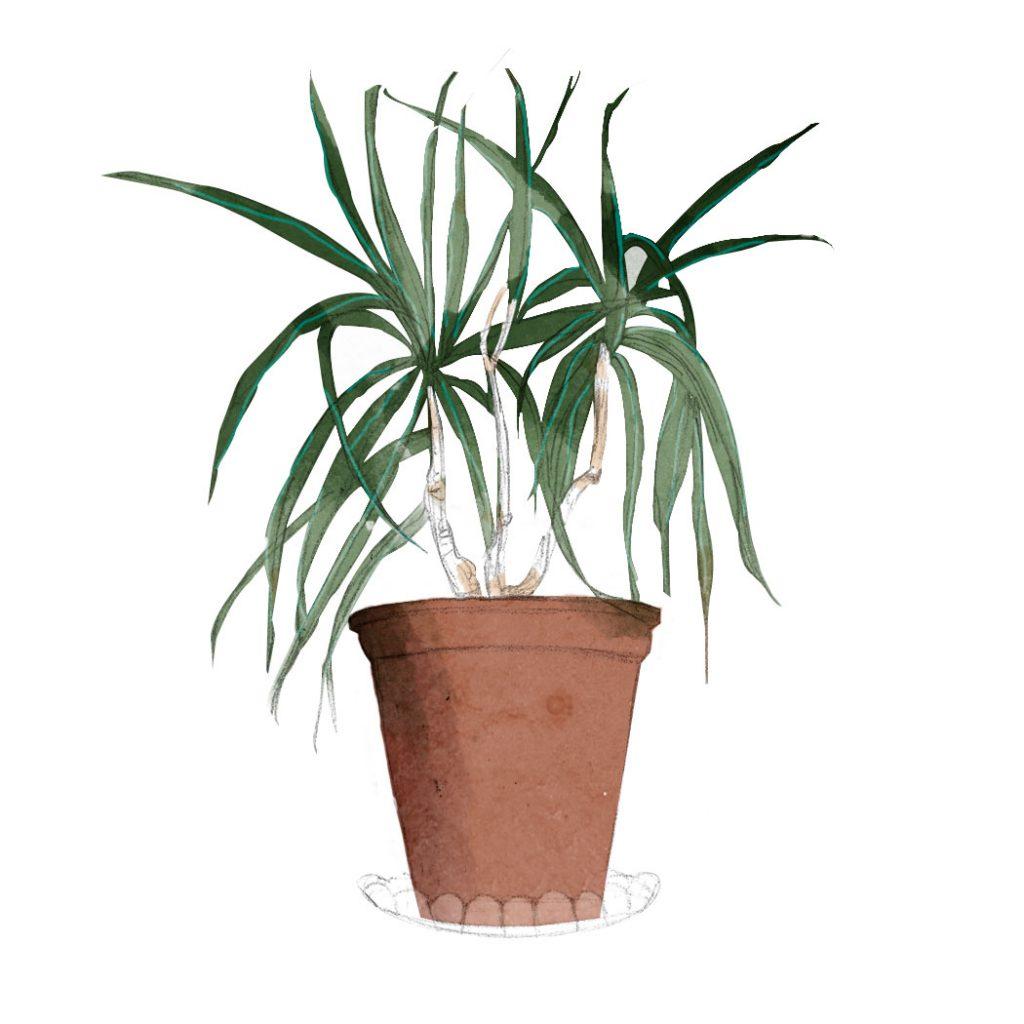 ilustración de una planta
