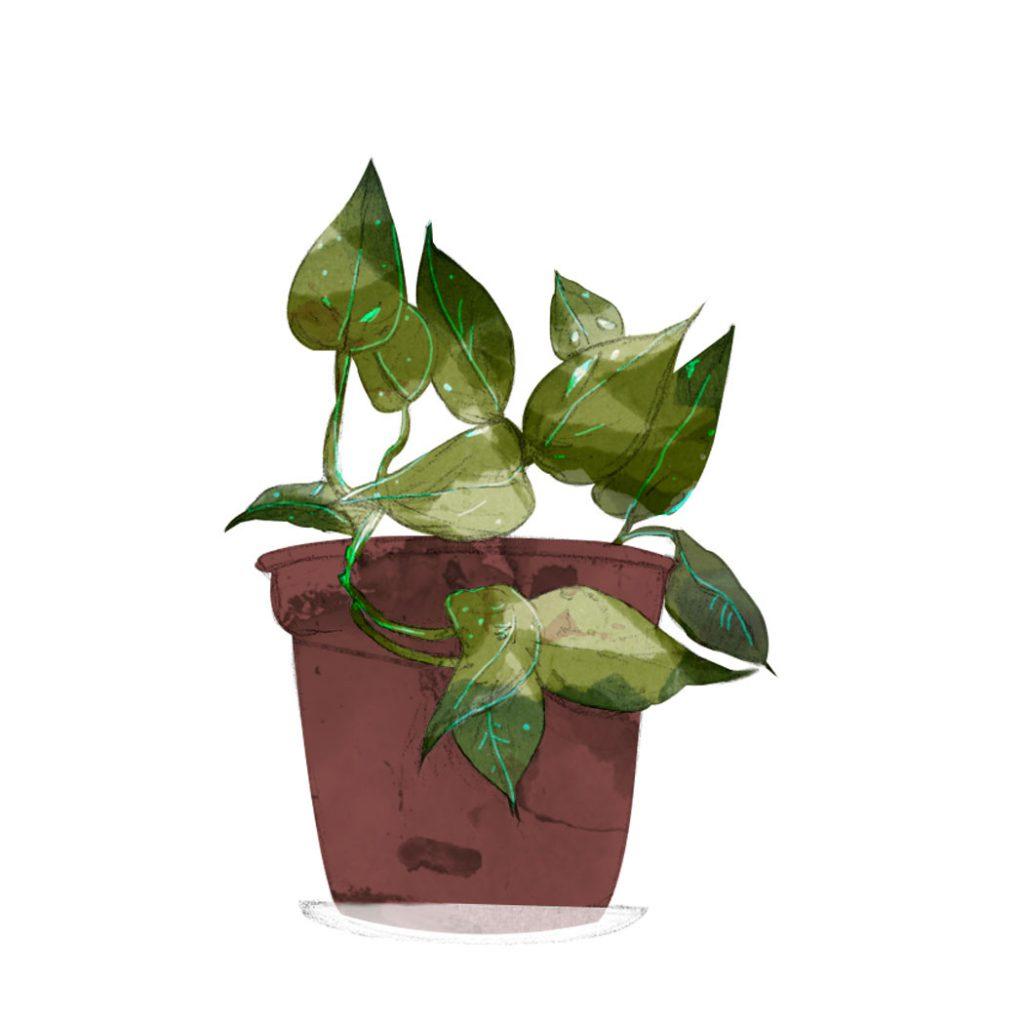 ilustración de una planta de poto
