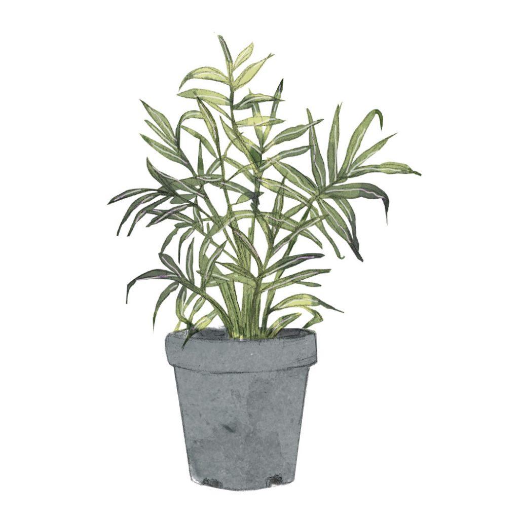 ilustración de una planta de palmera